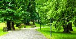 Taman Lamandau