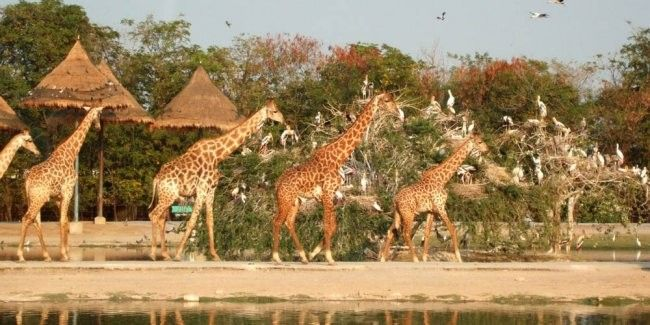 harga tiket Admission to Safari World with lunch and transfers