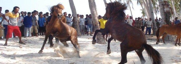 Aduan Kuda Muna