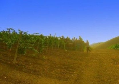 Agriturismo Tarantola
