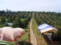 Agro Wisata Ngebruk Patean