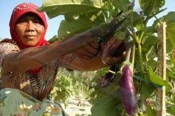 Agro Wisata Temanjang