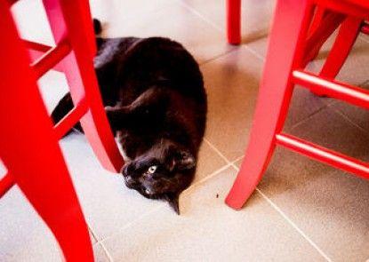 Alloggio del Gatto