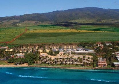 Aston Paki Maui