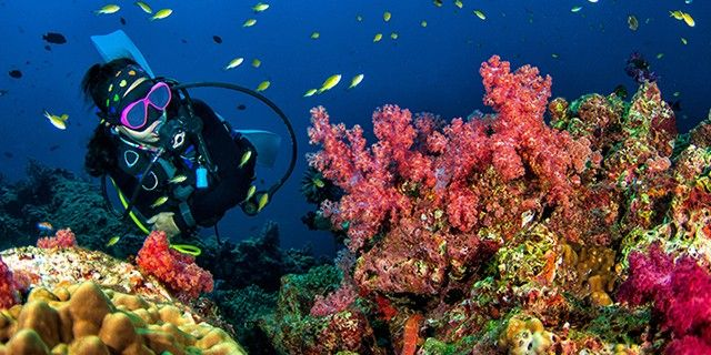 Bali Diving Tour - Serangan