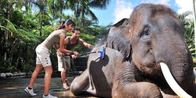 Bali Elephant Bathe and Breakfast (BB)