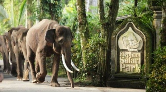 Bali Elephant Safari Park Taro (ADMISSION ONLY)