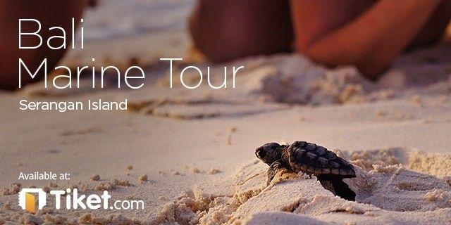 Bali Marine Tour - Serangan