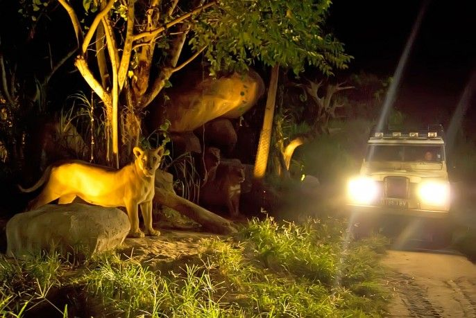 Bali Night Safari Admission - Indonesia Citizen Rate