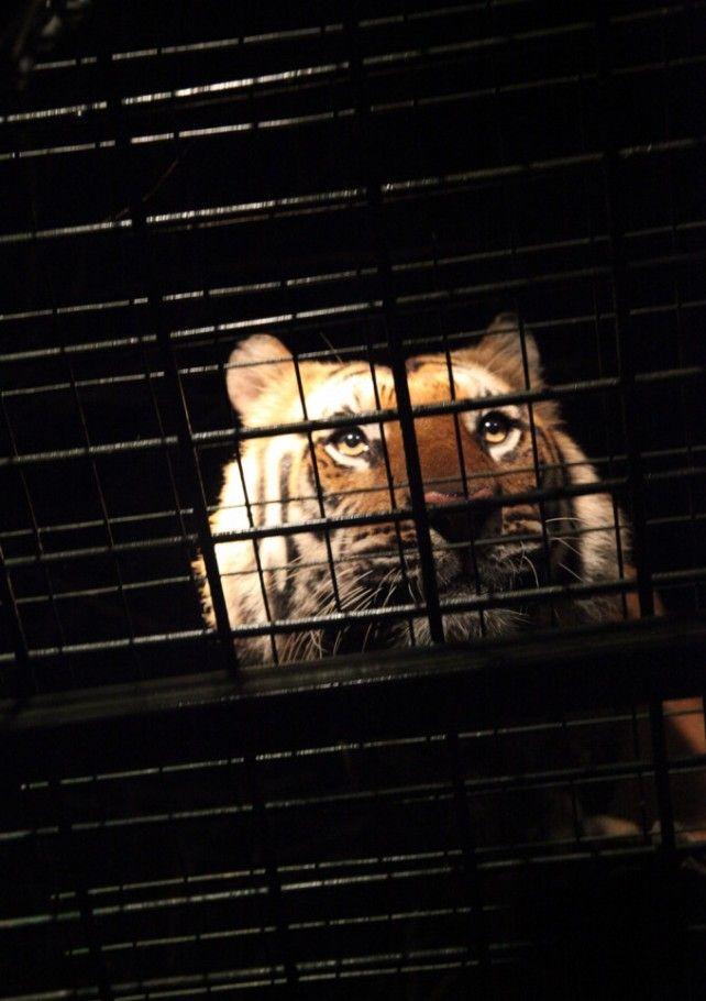 Bali Night Safari - Indonesia Citizen Promo