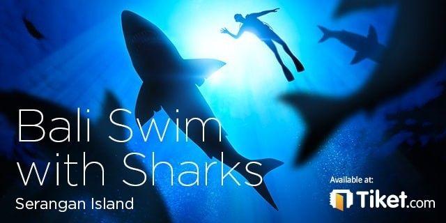 Bali Swim with Sharks