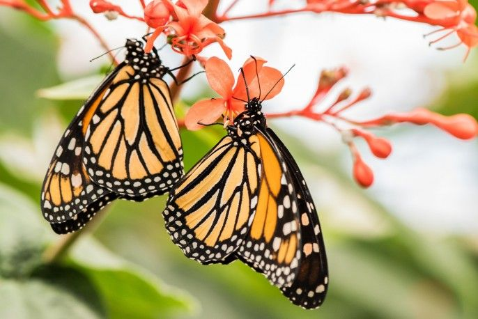 harga tiket Butterfly Park & Insect Kingdom