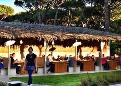 Camping Waikiki