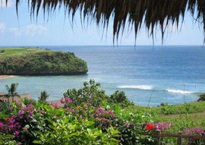 Coconuts Hummingbird