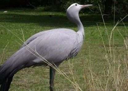 Crane\'s Nest Guest House @ 212