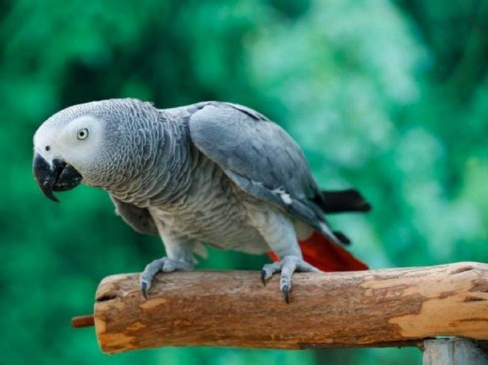 Creek Park Exotic Bird Show Ticket