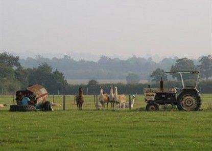 Darling Buds Farm