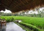Pesan Kamar Deluxe Double Rice field View di Sapulidi Resort Spa & Gallery