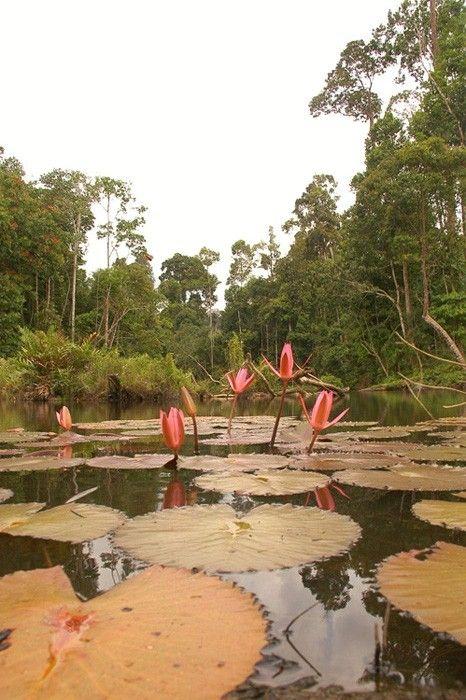 Taman Nasional Bukit Tigapuluh (TNBT)