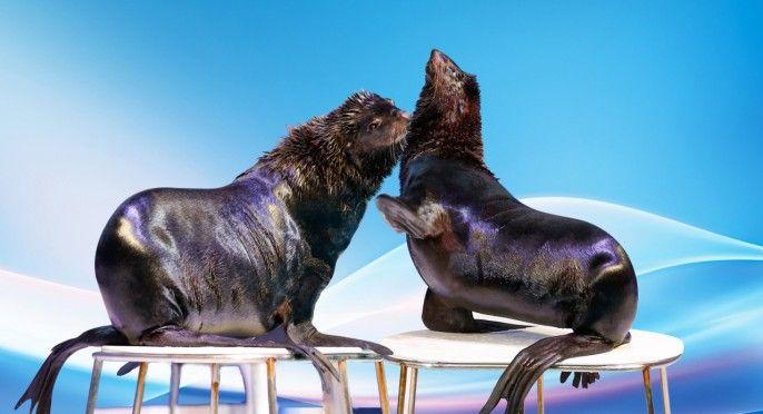 harga tiket Dolphin and Seal Show at Dubai Dolphinarium