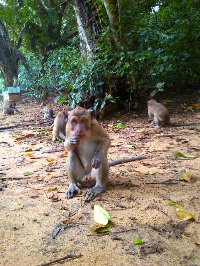 Taman Rekreasi Hutan Kera Nepa