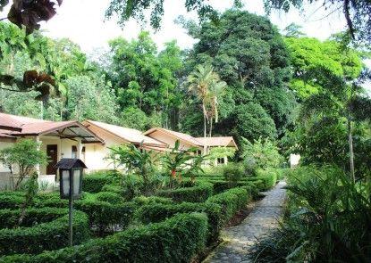 Ecolodge Bukit Lawang Eksterior