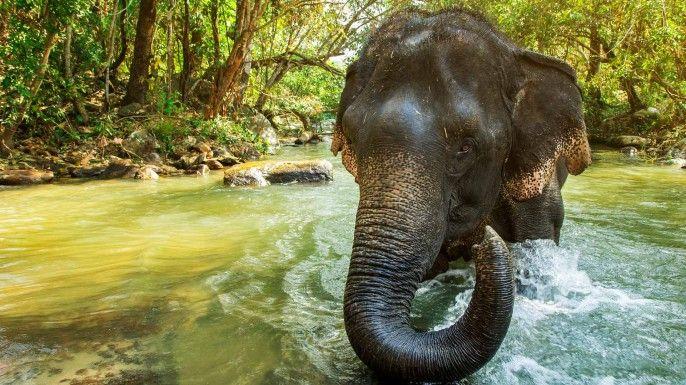 harga tiket Elephant Sanctuary Jungle Tour