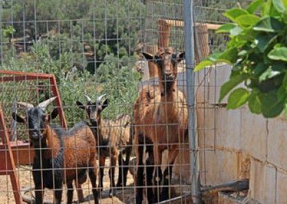 Farm Villa