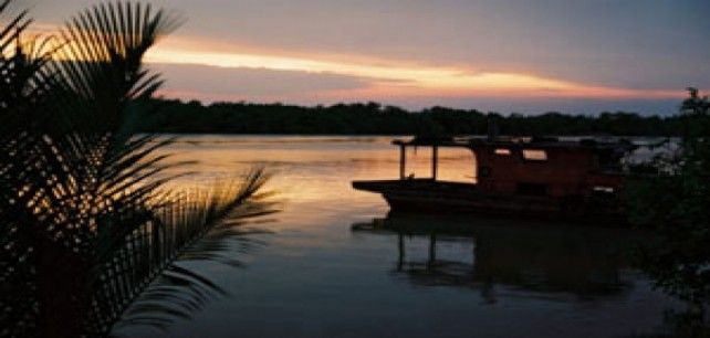 Full-day Firefly Tour in Kuala Selangor with Transfer