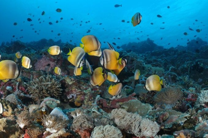 harga tiket Full-day Guided Scuba Diving Experience in Nusa Penida with Transfer