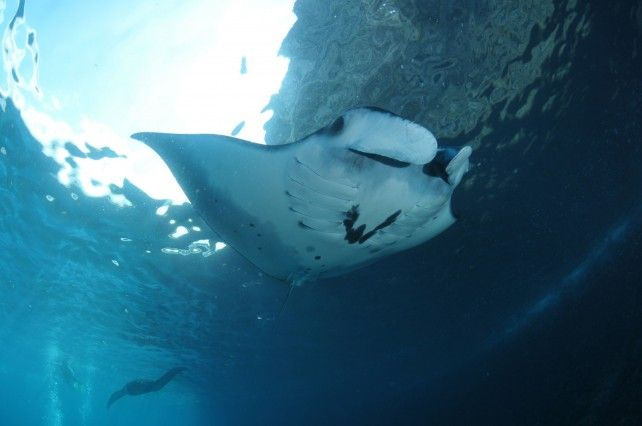 Full-day Guided Scuba Diving Experience in Nusa Penida with Transfer