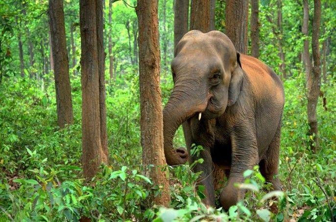 Full-day Maetaman Elephant Safari Tour (Join in Tour)