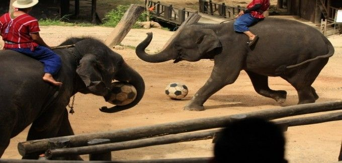 harga tiket Full-day Maetaman Elephant Safari Tour (Join in Tour)
