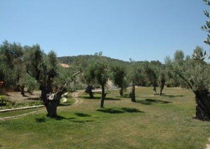 Gera\'s Olive Grove