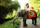 Pesan Kamar Grand Deluxe Giraffe Room Only di Royal Safari Garden Resorts and Convention