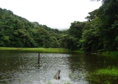 Heliconias Lodge and Rainforest