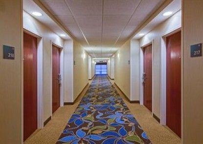 Holiday Inn Express Hotel & Suites Tampa Northwest - Oldsmar Teras