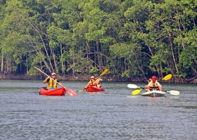 Kayaking Adventure at Mangrove Forest Reserve