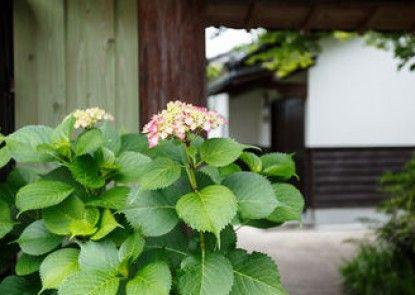 Koto no Kashin