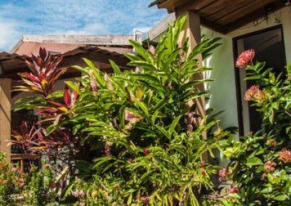 Maoritsio Garden Studios