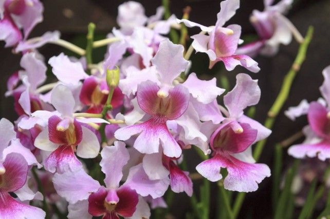 National Orchid Garden E-ticket