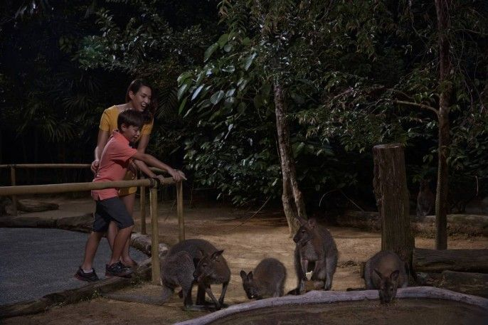 harga tiket Night Safari: Fixed Date Admission with Multilingual Tram Ride