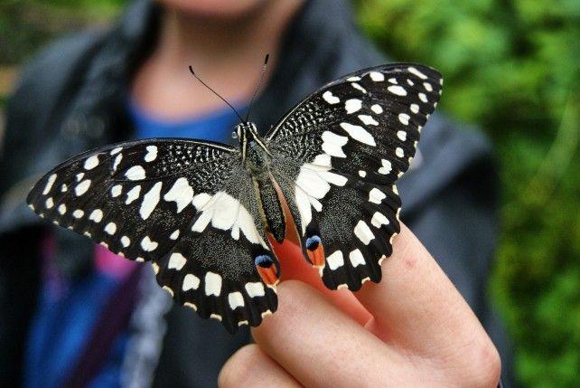 Orchid Garden, Butterfly Park and KL Bird Park Tour