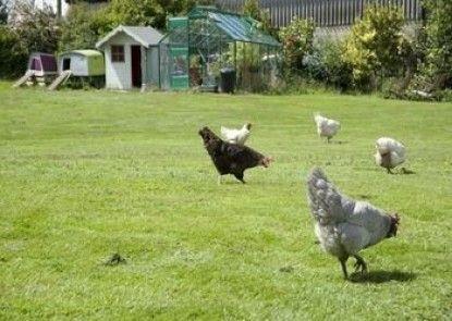 Padley Farm B&B