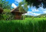 Pesan Kamar Cottage di Pai Phu Fah