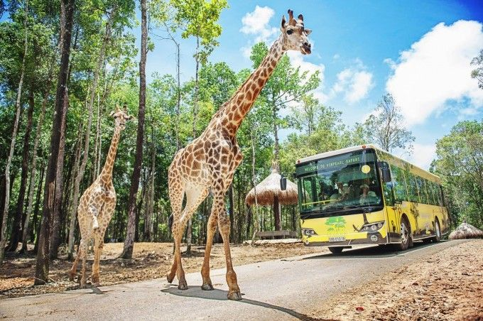 harga tiket Phu Quoc Safari Ticket