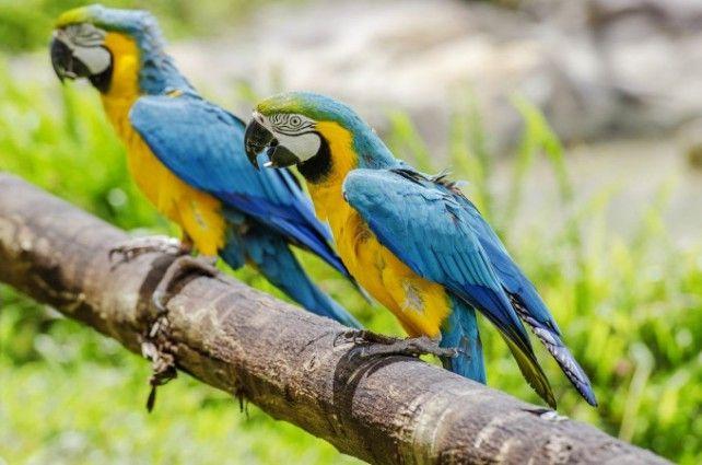 Phu Quoc Safari Ticket