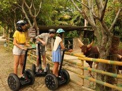 Royal Safari Garden Resorts and Convention