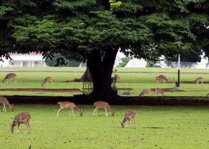 Sempur Park Hotel Bogor Taman