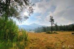 Padang Rumput Sikasur